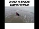 Собака не подпускает девочку к морю Лучший друг и защитник
