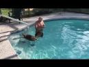 Лучше, чем плавание с дельфинами это купание с енотами