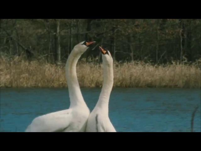 Таисия Повалий Два Крыла