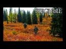 ЛЕСНАЯ ИЗБА ОТШЕЛЬНИКОВ | жизнь в дикой природе, трофеи, люди Севера, тайга, оружие, Фильм 2017