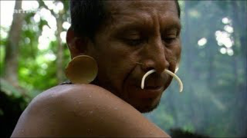 (126) Luxuriante Amazonie : Le Secret de la Diversité - YouTube