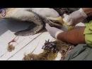 Rescate tortuga Golfina