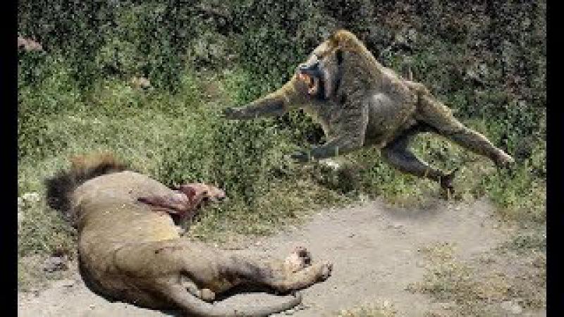 Crocodile vs Otter vs Big baboon vs Lion vs Cheetah ➜When Craziest animals attack Compilation
