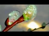 Ранняя весна, Релакс, Просто красивое видео! Природа Early spring, Relax, Nature