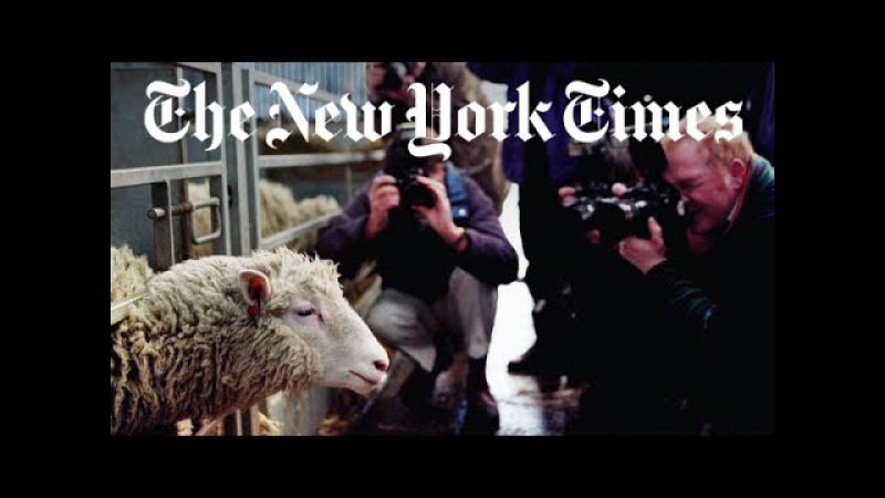 The Story of Dolly the Cloned Sheep
