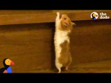 DETERMINED Hamster Climbing Stairs  The Dodo