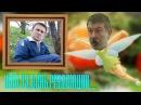 Навальный и Мальцев балабол и феечка