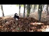 russian european LAIKA play whit old leafs