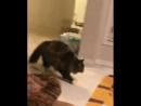Кот Джеки Чана 😾