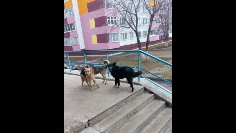 Стая бездомных собак разгуливает по городу!