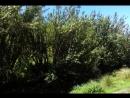 On foot - Cumbemayo Cajamarca