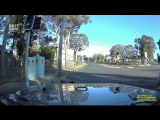 Австралиец героически спас опоссума, который подвергся нападению двух ворон.