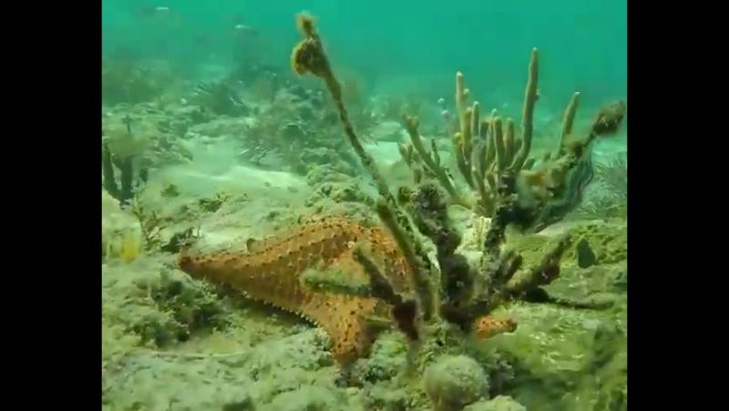 Для тех, кто скучает по Египту - ДОМИНИКАНА ) Все включено и красивейшее море (видео наших любимых туристов)