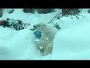 Звірі в оренгонському зоопарку радіють першому снігу
