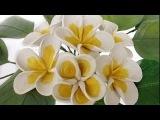 Quilling Plumeria flowers