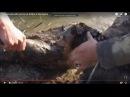 Увлекательная охота на бобра в Беларуси.