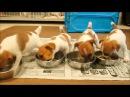 Yavru Köpeklerin Yemek Saati Gelmiş