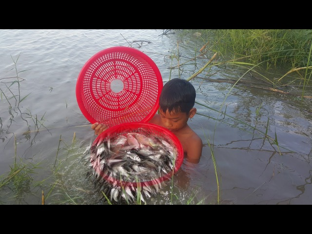 Two Boys Use Basket Trap Catch A Lot of Fish In The River, Cambodia Net Fishing