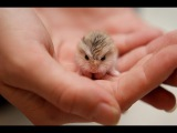 These Little Cute Animals Will Warm Your Heart #2 June 2017