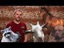 100500 - Спецвыпуск Про Животных