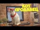 Кот продавец и розыгрыши над людьми и животными!😁 ЛУЧШИЕ ПРИКОЛЫ ШУТКИ Смешн ...
