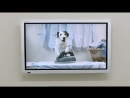 Thinkbox TV Ad - Dogs Home (2)