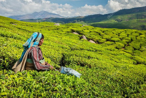 histroy of indian tea The indian tea industry as the second largest employer in the country has enjoyed the attention of the indian government when export sales went down, the government has been sympathetic to the demand of the industry and its cultivators topic: histroy of indian tea how about make it original.