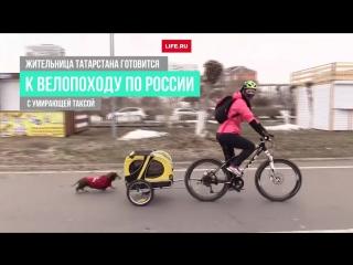 Девушка готовится в велопоход с умирающей собакой
