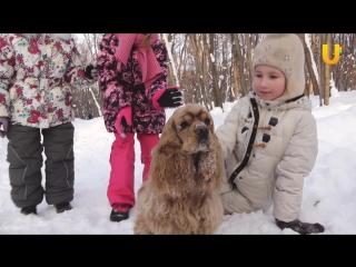 Глазами животных, выпуск 258 (Правила безопасности при общении с собаками)