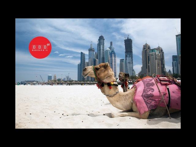 Гарячі тури до теплих країн Єгипет, ОАЕ, Шрі-Ланка
