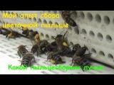 Какой пыльцесборник лучше для сбора пыльцы. Мой опыт сбора цветочной пыльцы