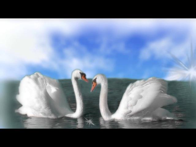 Лебедь- ( Сен - Санс)