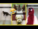Funniest Cats On Snapchat Im-paw-sible Not To Laugh At