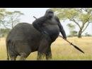 Gerçekten Var Olan 5 İnanılmaz Hayvan