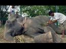 Когда его спасли после 50 лет мучений слон заплакал