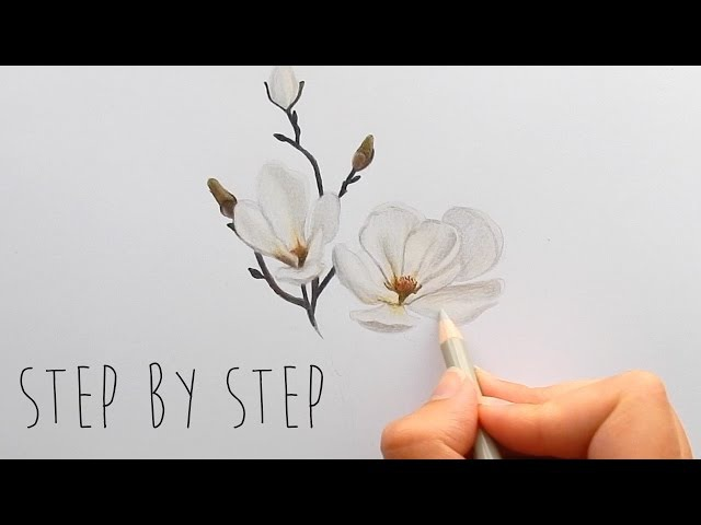 Step by Step | How to draw, color a white Magnolia flower with colored pencils | Emmy Kalia