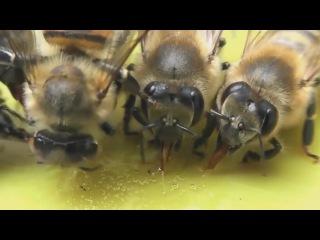 Медовый старт-ап: в Череповце впервые пройдут курсы по пчеловодству
