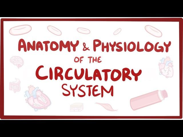 Анатомия и физиология кровеносной системы [Рус.суб.]