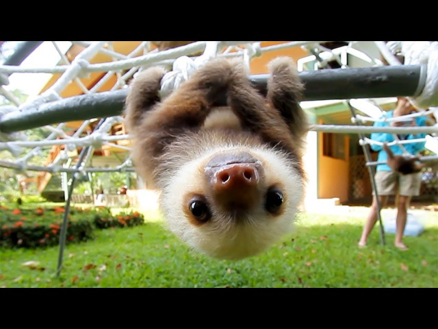What Does A Sloth Say
