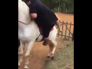 Лошадь, которая не любила жирных