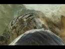 Крокодилы против акул все видео