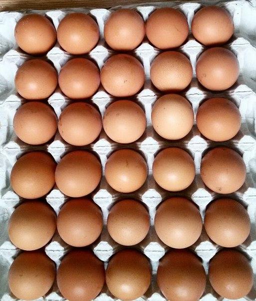 продам яйця домашні курки несушки. ціна 20 грн 10шт