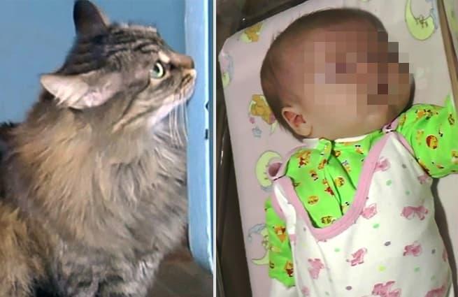 Мать выбросила ребенка умирать на морозе, но только представьте что сделала эта кошка!