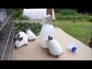 ПОИЛКА ДЛЯ КРОЛИКОВ Что нужно крольчатам
