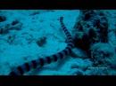 Дайвинг в районе острова Рача-Яй, часть 3 (Diving in the area of the island of Racha Yai, part 3)