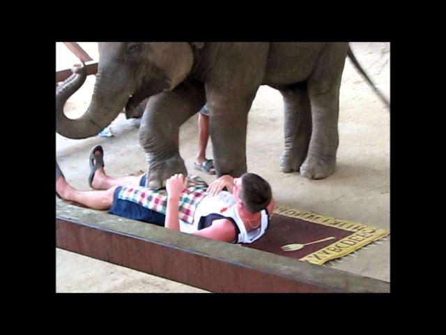 Слоновий массаж (Elephant massage)