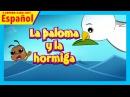 La paloma y la hormiga - historias en Español    historias para dormir    cuentos