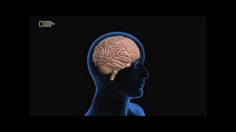 Наука будущего Стивена Хокинга Люди на заказ National Geographic