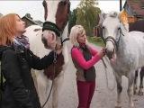 Украденные лошади нашлись, но не все