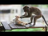 Animals fail Best Funny Monkey vs Cat Funny Pet Videos Kh